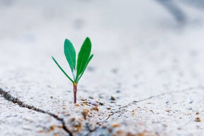 seed coming up from the concrete with organic cannabis marketing